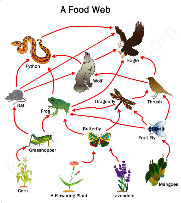 23 examples of food chains from various ecosystems, pictures, and.